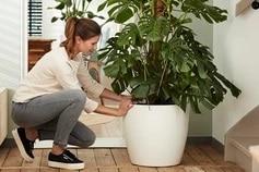 Pot plantes Elho