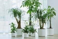 Support plantes Elho